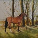 oil on canvas - 70 x 90 cm